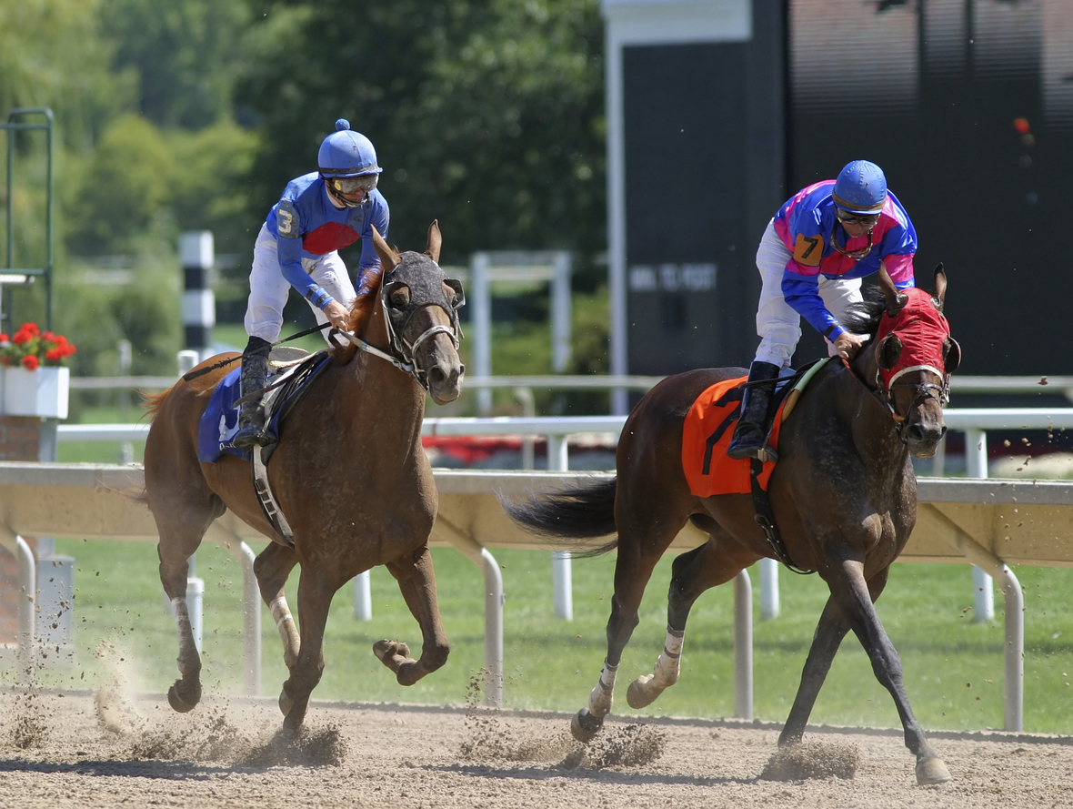 The finish of a horse race